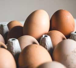 Empresas del sector avícola